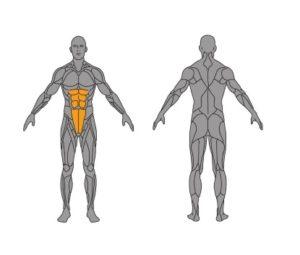 obere-Bauchmuskeln