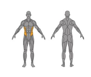 seitliche-Bauchmuskeln